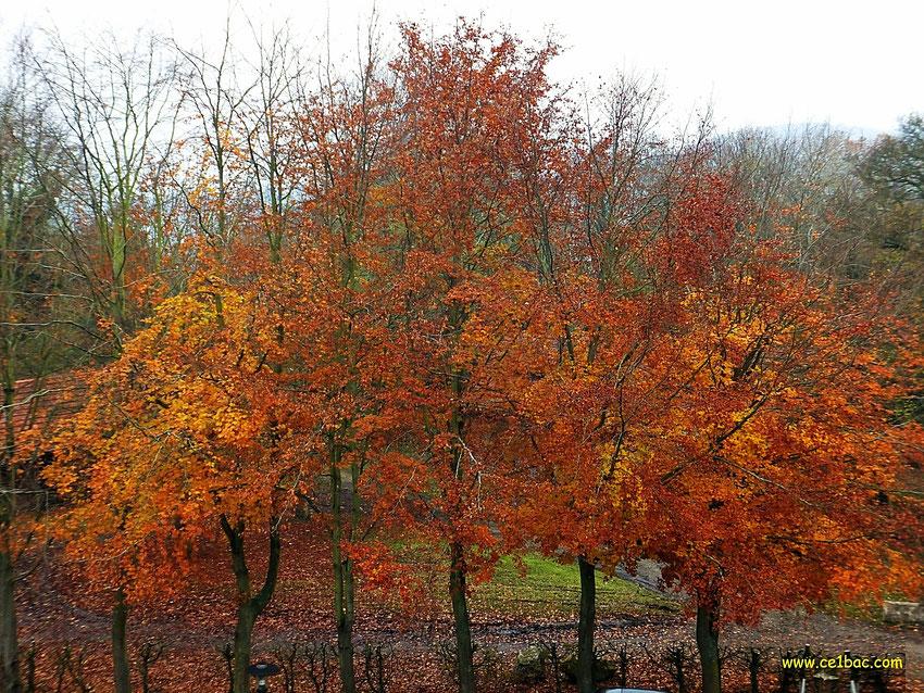 arbres en autome, feuilles rousses et jaunes