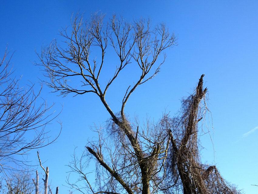 arbre sur ciel d'hiver