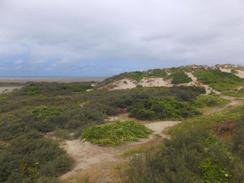 Dunes de la Mollière
