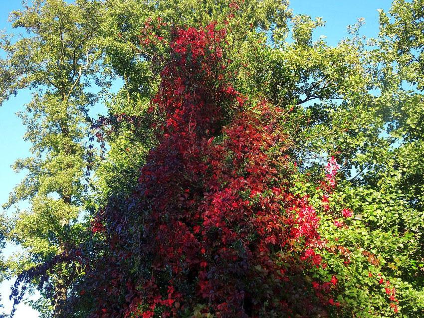 feuilles rouges en automne