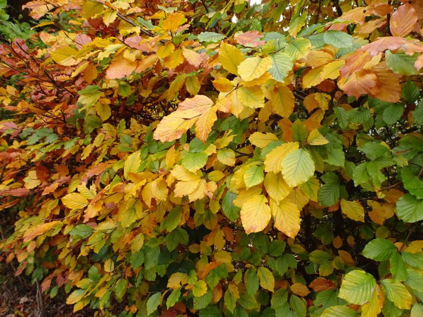 feuilles en novembre