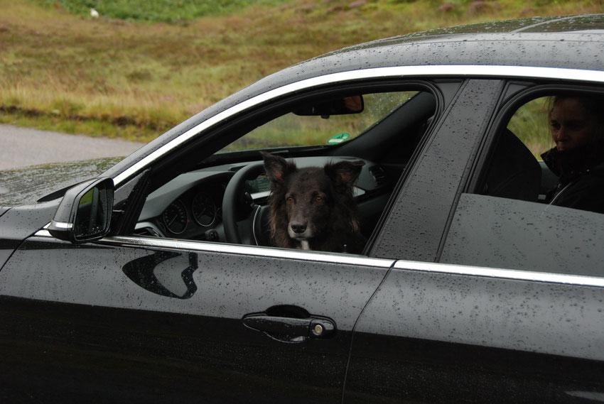 Hund auf Fahrersitz in einem schwarzen BMW in den schottischen Highlands