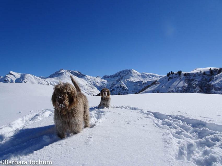 Spione-Hunde in weißer Berg-Landschaft in Lech am Arlberg