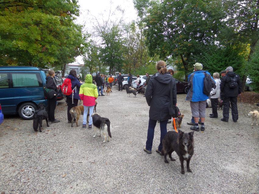 Hunde warten auf Start der Wanderung auf Parkplatz Hartsee-Stüberl