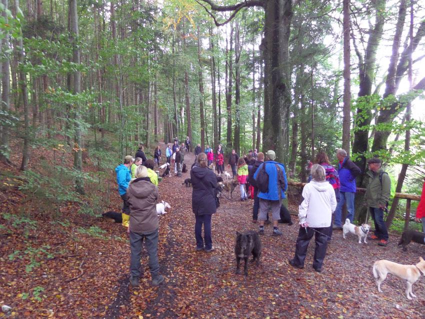 Hunde und Menschen auf Waldpfad am Hartsee, Bayern.