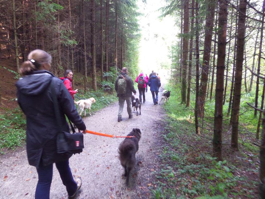 Hunde an der Leine auf Waldpfad am Hartsee, Landkreis Rosenheim.