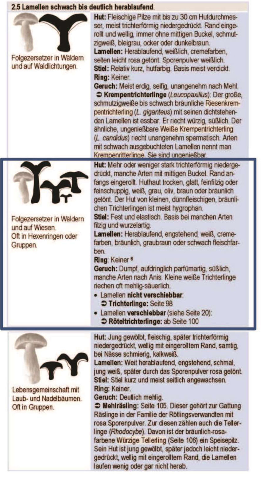 Gattung Trichterlinge oder Röteltrichterlinge gefunden