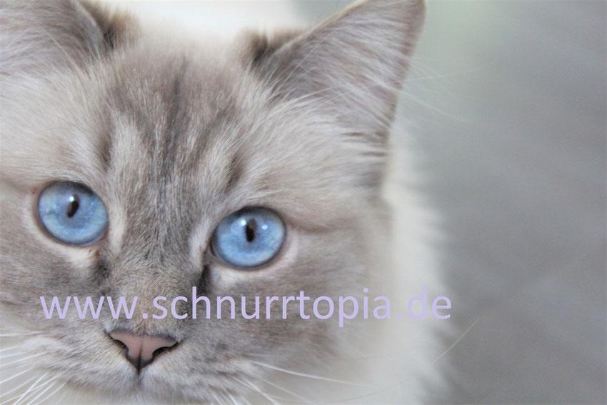 Daniela Müllers Schnurrtopia, alles für die Katz. Mobiles Katzensitting, Katzen-Verhaltensberatung, Literatur und mehr
