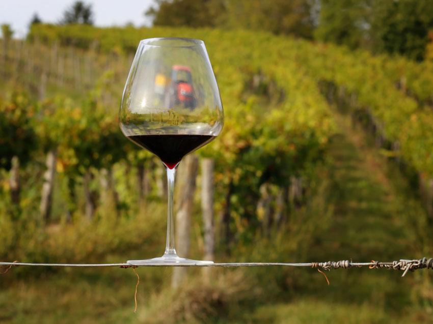 optimale Cuvée Cuvetierung optimiert Wein Unikat