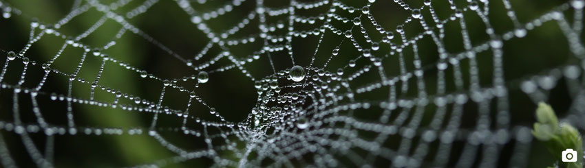 blog marie fananas écrivain image toile d'araignée