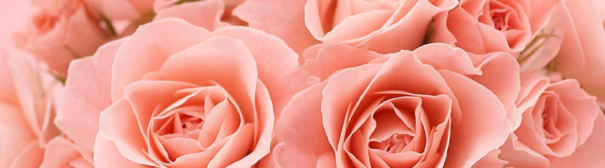 image roses rose en gros plan - blog marie fananas