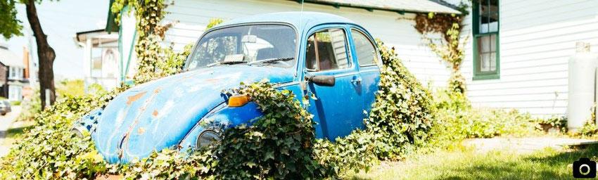 image voiture recouverte de végétation - blog marie fananas écrivain