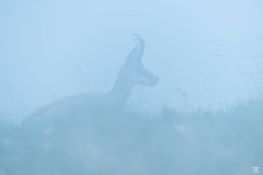 Im Nebel (B2135)