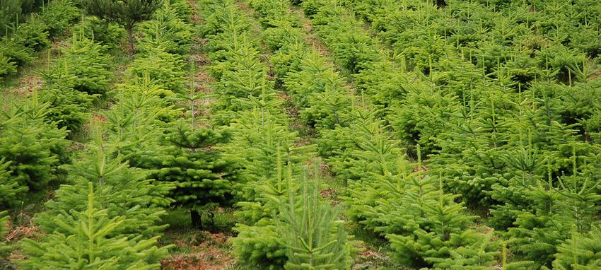 Die Tannenbaumplantage auf der Wäckerschwend - Tannenbaumplantage Wälchli Weihnachtsbäume Wäckerschwend