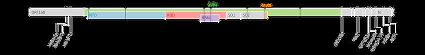 スパイクタンパク質に焦点を当てたSARS-CoV-2のゲノムマップ上にプロットされた、デルタ株のアミノ酸変異