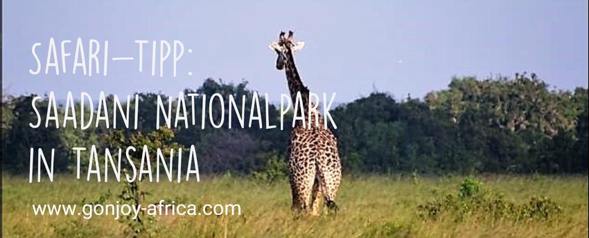 Saadani Nationalpark Tansania Safari