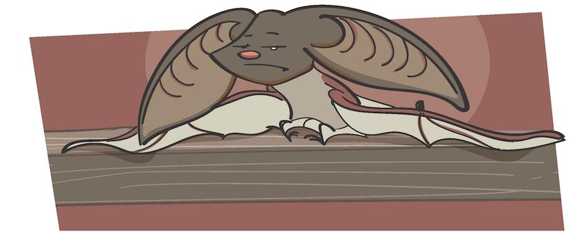 Das Graue Langohr sitzt traurig mit hängenden Ohren auf einem Holzbalken. Es geht ihm nicht gut.