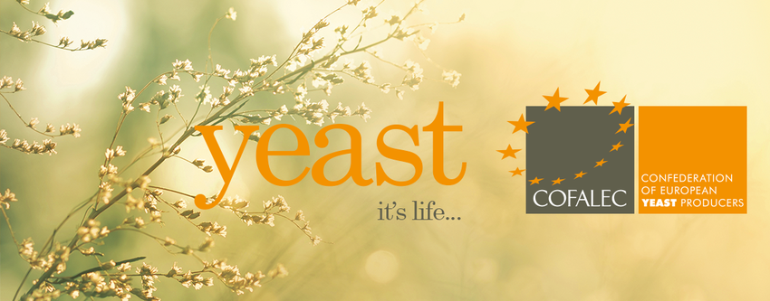 Yeast Characteristics - Yeast it's life - COFALEC