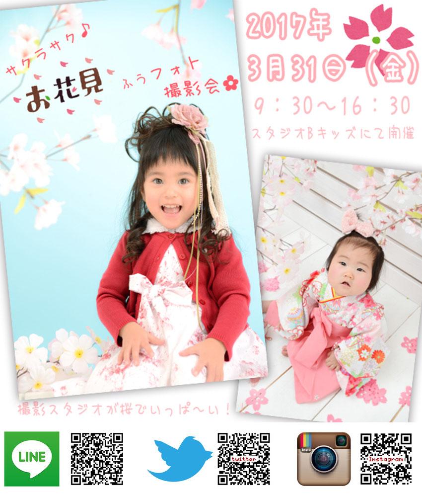 イベント お花見 名古屋 愛知 フォトスタジオ 写真館 3月 サクラ 桜