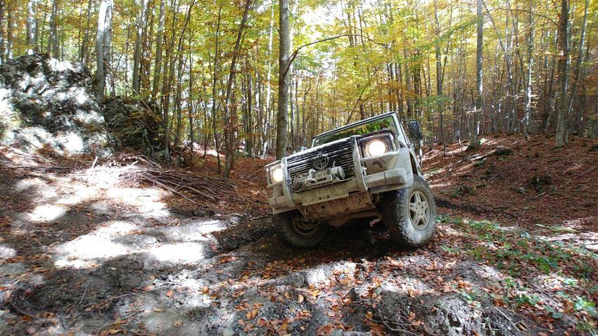 Offroad-Pfade führen uns immer tiefer in die Wälder - Red Rock Adventures