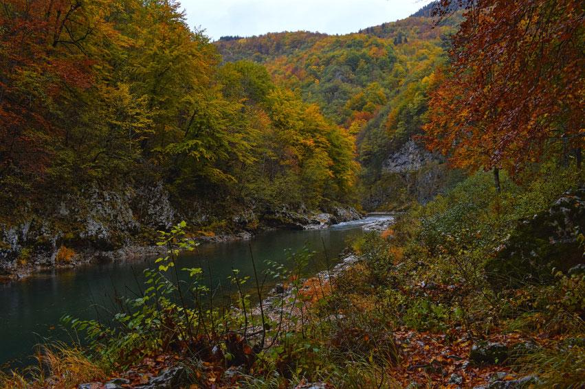 Herbst Montenegro Durmitor Nationalpark Tara Canyon