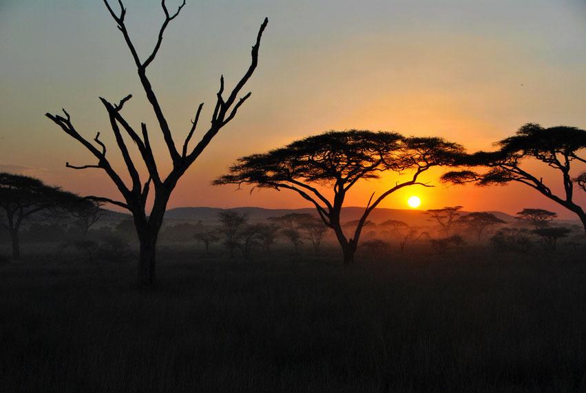 Sonnenuntergang Serengeti Nationalpark Tanzania