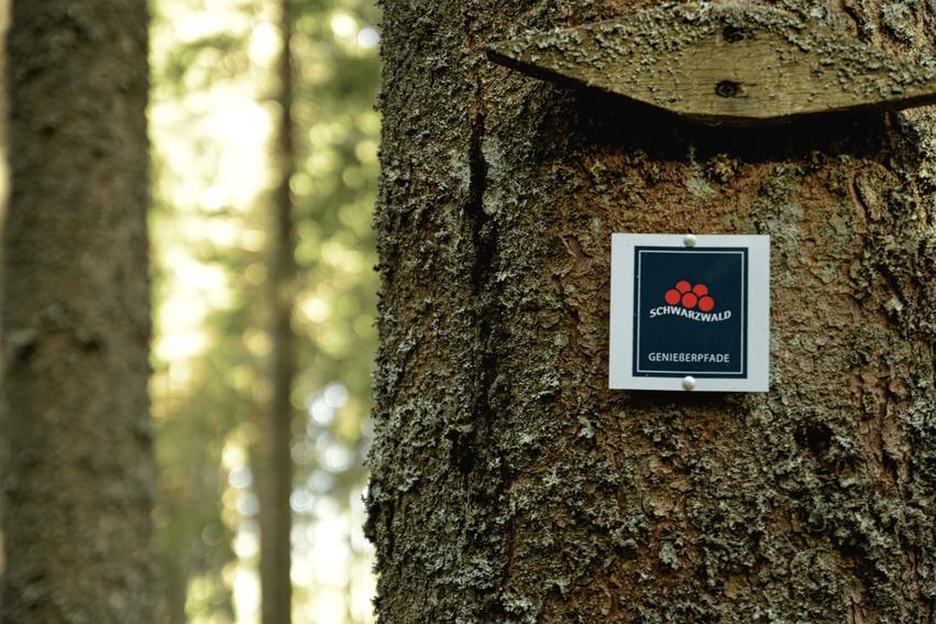 Hochschwarzwald wandern Genießerpfade