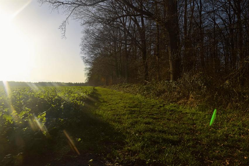 wandern Niedersachsen Nordpfad