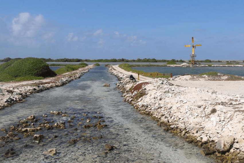 Bonaire-Highlight-Saline