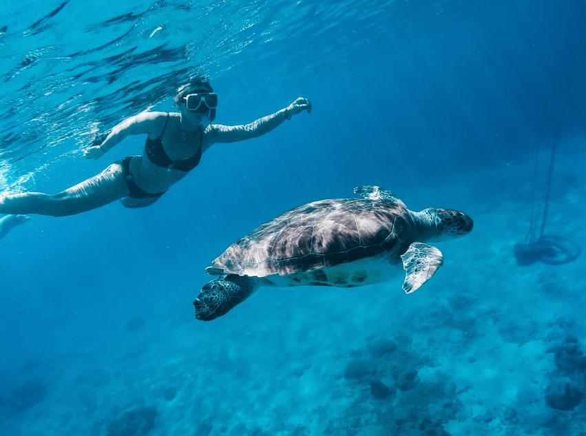 Curaçao schnorcheln Meeresschildkröten