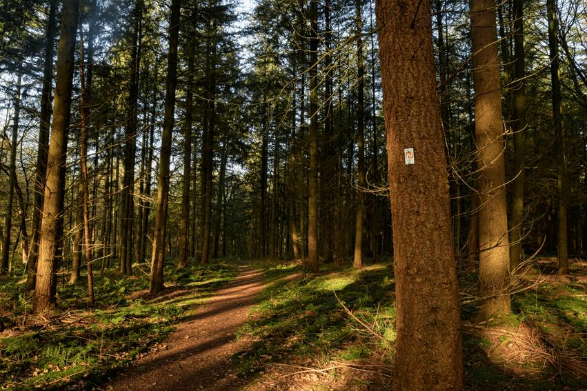 Nordpfade wandern Niedersachsen