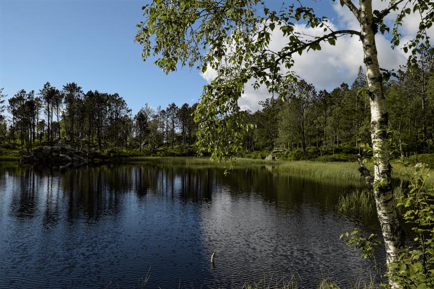 Wandern Fløyen Panoramarunde
