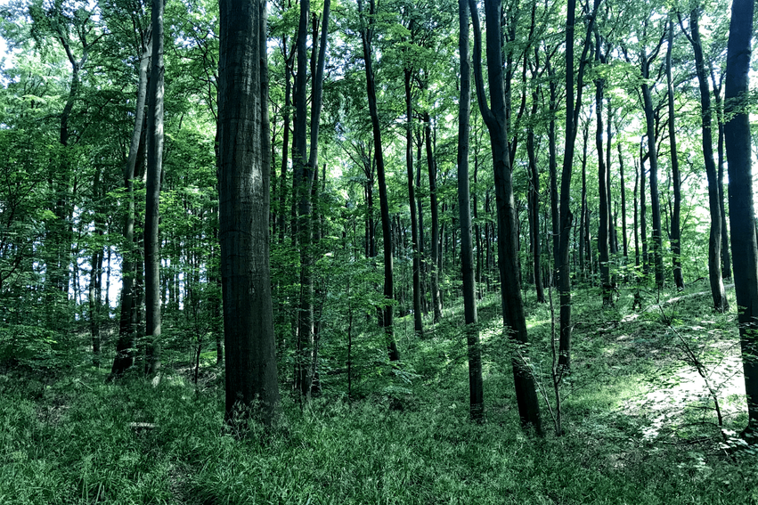Steinort Wald Ratzeburg