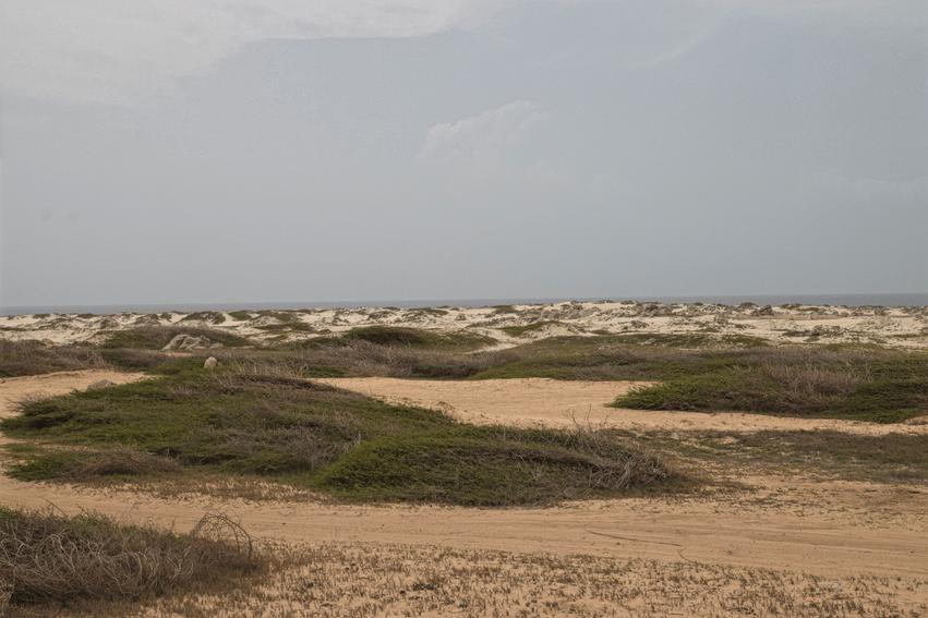 Arashi Sanddünen Aruba