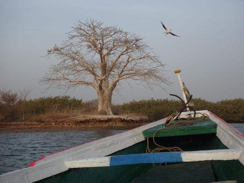 boat trip Mar Lodj, Sine-Saloum Delta