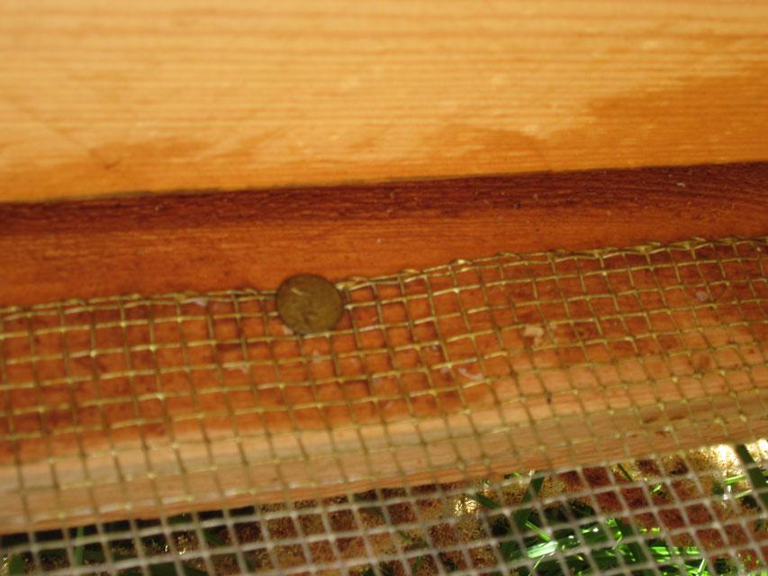 Die ungeschnittene, glatte Kante des Lüftungsgitters zeigt zum Flugschlitz, damit sich einlaufende Bienen nicht verletzen können. Die geschnittenen Kanten mit offenen Drahtenden werden links und rechts beim Verschrauben zwischen die Latten geklemmt.