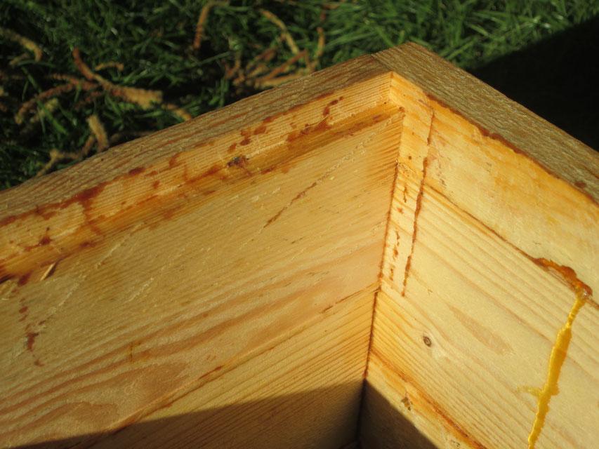 Innenansicht eines Magazins mit Auflagekante für die Rähmchenohren. Man sieht schön, wie die Bienen bereits gekittet haben und rechts im Bild auslaufendes Harz der jungen Beute.