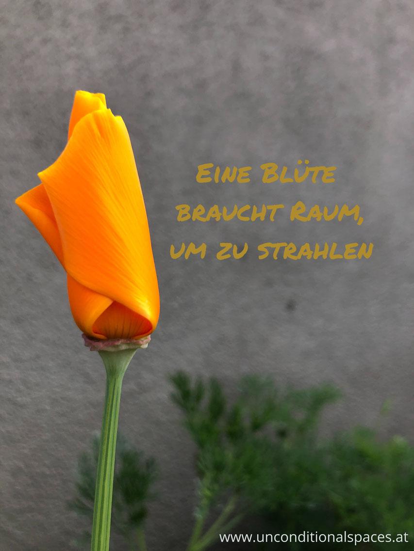 Eine orange Blüte ist noch leicht geschlossen. Sie braucht Raum zum Strahlen.