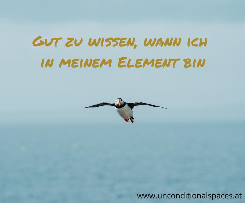 Ein Eisvogel fliegt über das Meer und sagt, gut zu wissen, wann ich in meinem Element bin