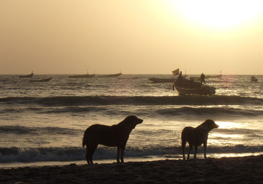 fishing boats, dogs and sunset on paradise beach, Sanyang, Gambia