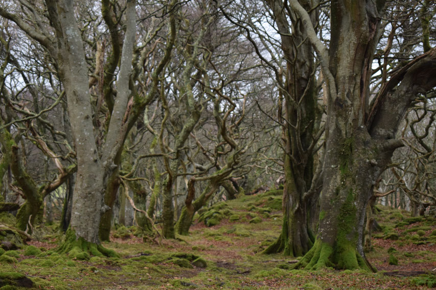 ancient woodland, Islay, Scotland