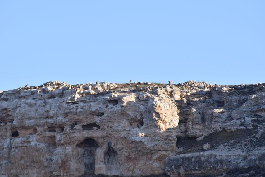 Vultures, Emblase de Linares, Spain