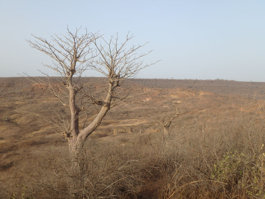 Dry season Senegal - Natural Reserve of Popenguine