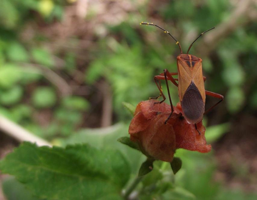 insect El Jardin campsite and accomodation, Samaipata, Bolivia