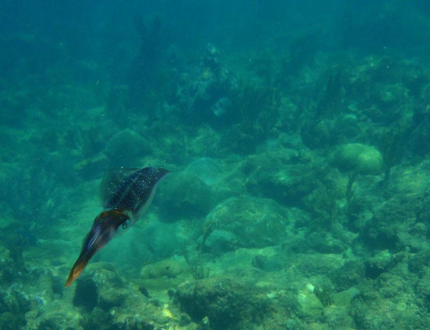 Snorkelling, Castara, Tobago