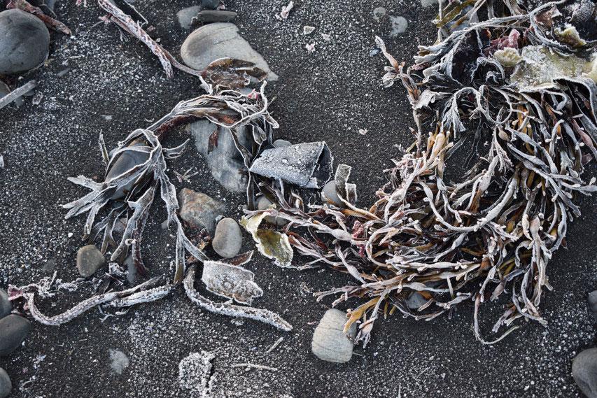 frozen seaweed