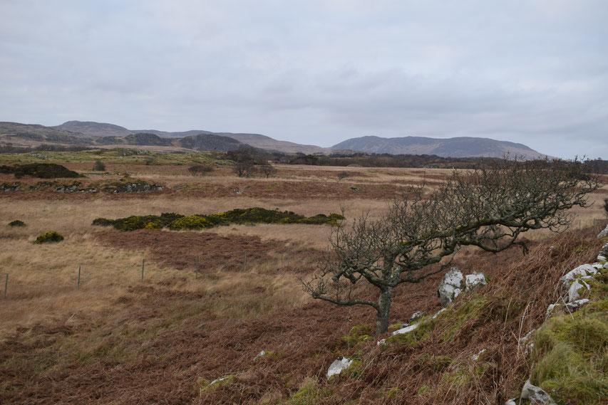 Moorland Islay
