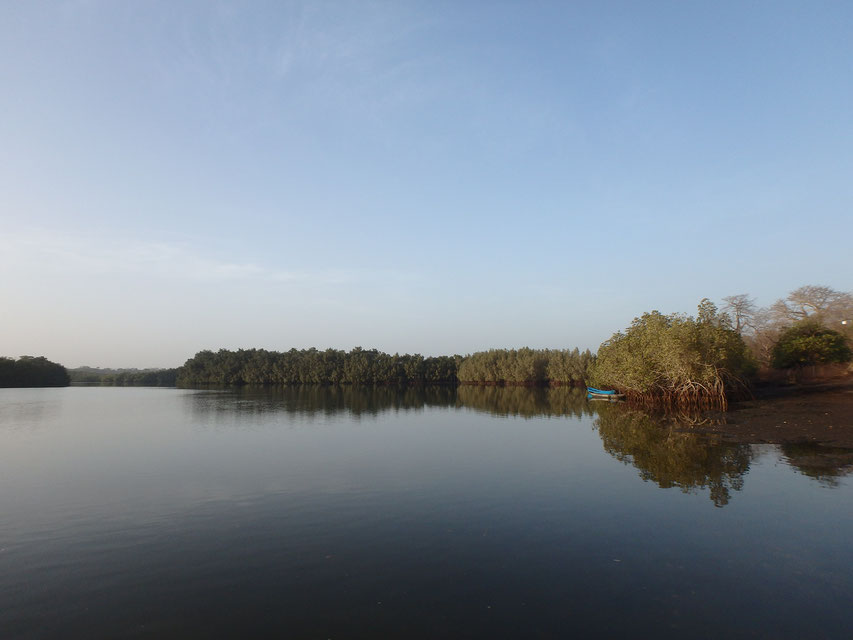 mangroves and canoe, Tumani Tenda, Gambia