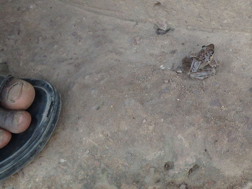 Frog, Tumani Tenda
