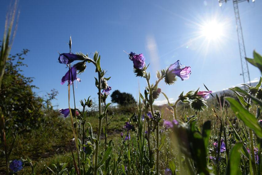 Rückzug in den Kanaren, Teneriffa wandern, Frühling auf Teneriffa